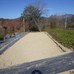 カモマイル・ジャーマン畑の改修作業はほぼ完了しました