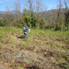 そして今日も除草作業が行われています