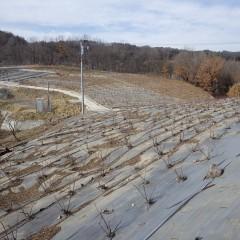 ローズ畑に雪は残っていません