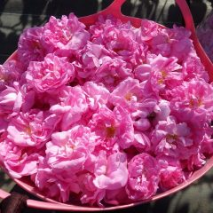 ローズの花籠