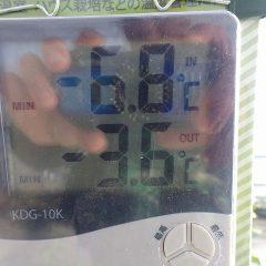 ハウス内の最低温度-6.8℃、ユーカリ・レモンのトンネル内は-3.6℃