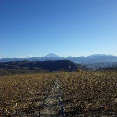 ローズ畑には冷たい風が吹き荒れ富士山は雪煙を巻き上げています