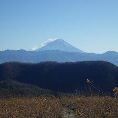 穏やかに見えるローズ畑ですが相変わらず寒風が吹き荒れて遠くの富士山は雪煙を巻き上げています