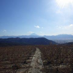 冬場れのローズ畑は今日も寒風が吹き荒れています