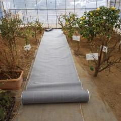 ハウスの中の雑草対策と病気予防の為に防草シートを張りました