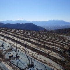 農場に現れた富士山は真っ白に雪化粧して凍る様に冷たい風が吹いています