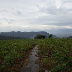 雨が本降りになり農場での作業は終了