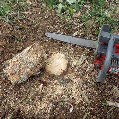 チェーンソーで地面から出ている切り株を切り取りました