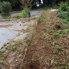 切り株の周りに生えていた雑草を除草しました