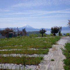 今日も富士山が出迎えてくれました