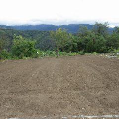 2回目の耕耘作業が終わったカモマイル・ジャーマン畑