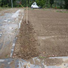 種蒔きをするために畝立て作業をしました