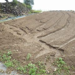 台風の雨で柔らかく耕した表土が一部流されてしまいました