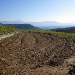 これから種を蒔くカモマイル・ジャーマン畑畑