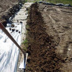 雨で硬く締まった土を掘って軟らかくします