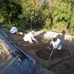 掘り起こした土は硬く固まっています