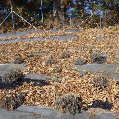吹き溜まりには落ち葉が沢山集まっています