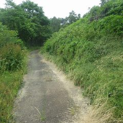 ラベンダー畑に続く農道の雑草が茂って通りにくなっています