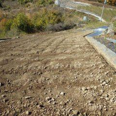 排水溝を掘った斜面畑