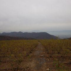 農場は朝から湿って冷たい空気に覆われています