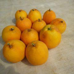 オレンジは僅か11個