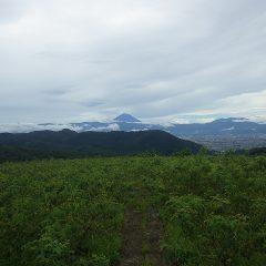 農場から久し振りに見えた富士山は山頂に雲がかかっていました